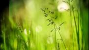 Пролетно пробуждане на природата! ... ...