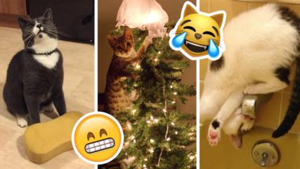 Лудите котки и тяхната абсурдна логика! 7 примера, които ще ви разсмеят