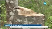 Поголовна сеч в Троянския балкан