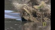 Атаката на крокодила