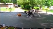 Животни скачащи в тамплион