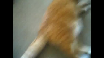 котка пърди доста мощно