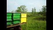 Подвижно пчеларство Росен и Слави пролета на 2009