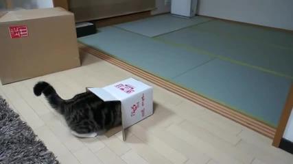 Кутията и Мару