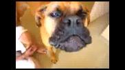 Говорещи Кучета