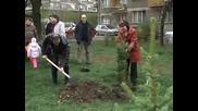 """Дарик засади 25 дръвчета в парка """"Заимов"""""""