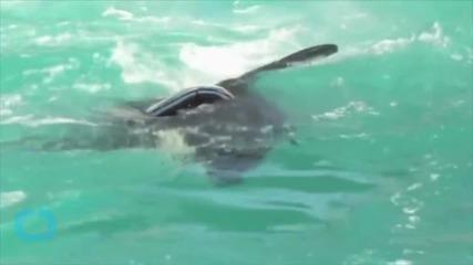 No More Trainer Rides for Lolita the Miami Killer Whale