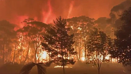 Australia: Bush fire rages in Mount Tomah, New South Wales