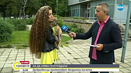 Доброволци основаха кучешки приют в Козлодуй