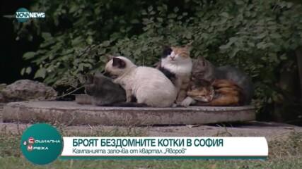 Броят бездомните котки в София