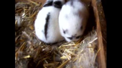 Малките ми зайчета се опитват да прохождат ... :)