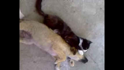 Голяма любов между куче и котка