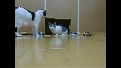 Смешен Мач с Котки !