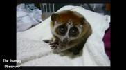 Най-сладките животни! - Компилация