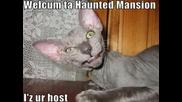 ! Много забавни котки !