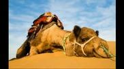 Емилия - Моите камили 2014 by me