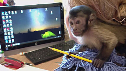Meet the 'monkey mum'! Russian wildlife park worker raises abandoned baby capuchin
