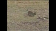 Заек срещу змия - кой е по бърз ?