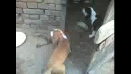 Ловни Кучета На 3 Месеца Селановци