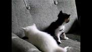 Тези Котки Се Бият Като В Кеча