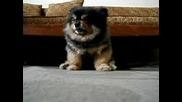 На Кученцето му се спиииии