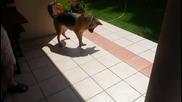 Смях! Куче пробва да смачка сянката си