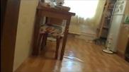 Котката откача кога види че я снимат