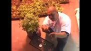 Los Marijuanos and Fcm Click Lets Smoke video
