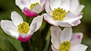 Ричард Клайдерман - Диви цветя