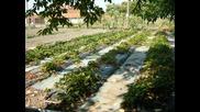 градината на баща ми