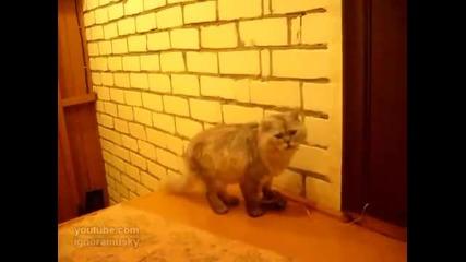 Котка звъни на звънец