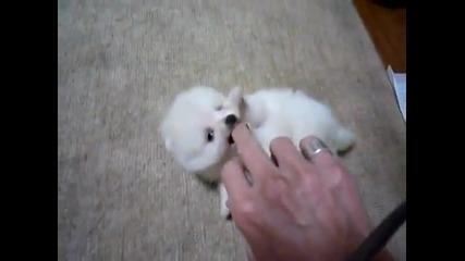 Най-сладкото куче на света - Пухче ;*