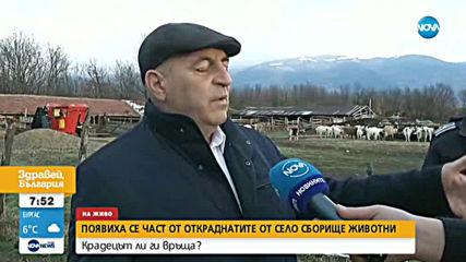 ТУКА ИМА, ТУКА НЯМА... КОЗИ: Появиха се част от козите задигнати в Сливенско