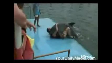 Изнасилване От Делфин