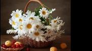 Любимите ми маргаритки за всички Вас! ... (music Ernesto Cortazar) ... ...