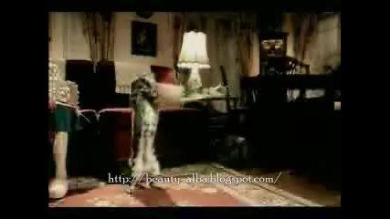 Котка с футболен талант. Смях