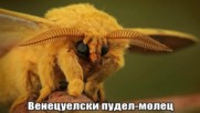 Много странни животни, които наистина съществуват