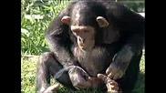 Maimuna