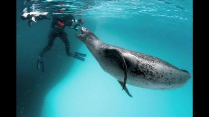 Морски Леопард