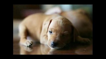 Сладки Кученца