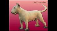 St - Kampfhund