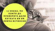 10 знака, по които да проверите дали котката ви ви обича истински