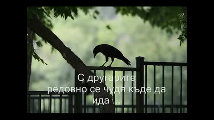 Sinan Sakic - To Je Zivot Moj превод 2009