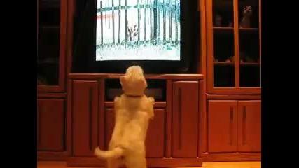 Куче откача докато гледа Animal Planet