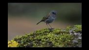 Ugress - Nightingale