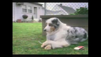 Куче с цигара