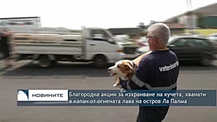 Благородна акции за изхранване на кучета, хванати в капан от огнената лава на остров Ла Палма