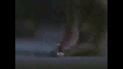 Buffy & Angel - Заклевам Те