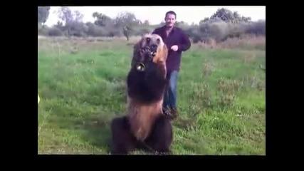 Умна мечка