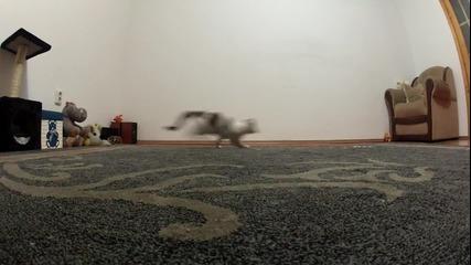 Котенце се забавлява с лазер